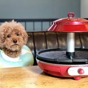 家で焼肉するならコレ!ザイグルの魅力と犬