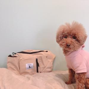 超便利!犬のお散歩専用バッグを使ってみた
