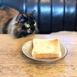 コレで焼いたら間違いなし!サクフワ絶品トースト