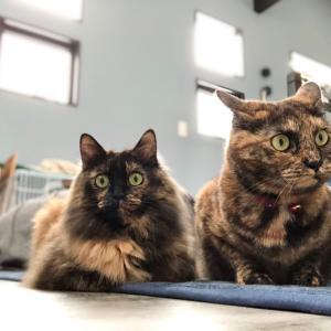 猫タワー上でのプロレス〜仲良しなのか、そうでもないのか…〜