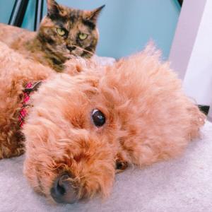 犬と猫仲良し⁈ドタバタな凸凹姉妹