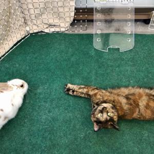 猫とウサギと犬が集合!何コソコソ話してるの?!