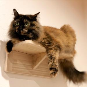 【猫が喜ぶキャットステップ】diyに自信の無い人におすすめのアイテム