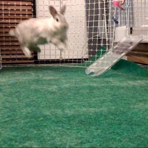 「空飛んでる!笑」真夜中に荒ぶるウサギ