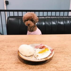 深夜に食べた朝食メニュー?!白パンを作ってみた