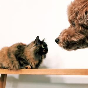 いつも定位置にいる犬と猫
