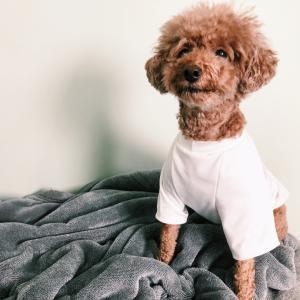 愛犬に夏服を新調しました