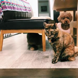 「姉さんをいじめるな!」犬をかばう猫