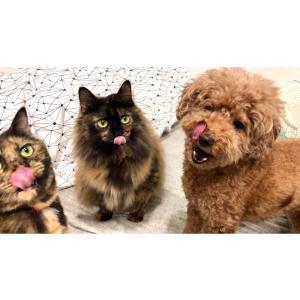 仲良くオヤツを食べる犬と猫の三姉妹