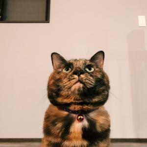 猫飼いさんは絶対買うべき!プロジェクターと猫