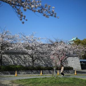 名古屋城の桜は満開です 続編