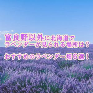 ラベンダーを見に北海道へ!富良野以外のおすすめの場所6選
