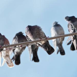 車を鳥のフンから守りたい!対策方法・グッズはある?変わったものから憧れまで紹介!