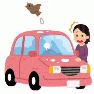鳥のフンから車を守る鳥よけサンシェードは効果あり!?効果を高める方法と作り方を解説するよ!