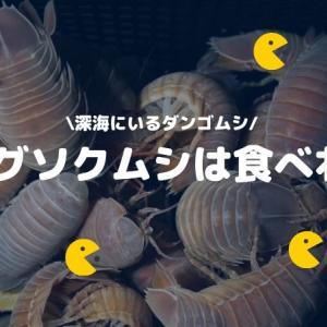【深海のダンゴムシ】食用のオオグソクムシをおいしく食べる!
