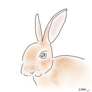 ウサギのララちゃん(๑╹ω╹๑ )