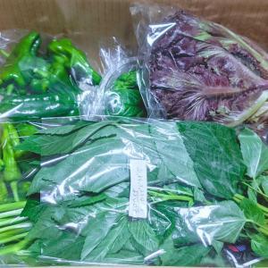 【ネタバレ2回分】と、リピぽち!Wクーポンで南房総野菜セット
