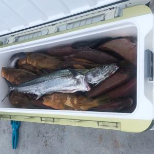 7月14日ライトジギング釣果情報|遊漁船昭和丸