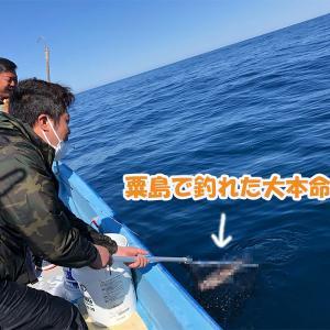 5月11日近海&12日粟島ライトジギング釣果情報