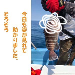 5月15日粟島近海ライトジギング釣果情報と直近の釣り船募集案内
