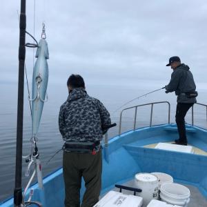 5月19日粟島近海ライトジギング&キャスティング釣果情報