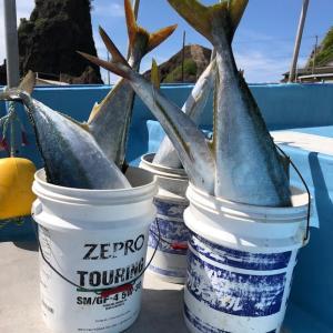 6月1日キャスティング釣果情報|ブリトップで爆釣