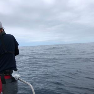 7月上旬新潟県村上市寝屋漁港キャスティング釣果情報