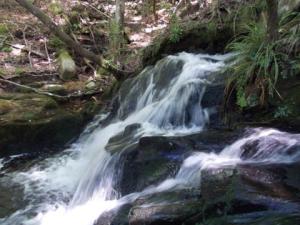 たまには森林浴にでも~るり渓自然公園