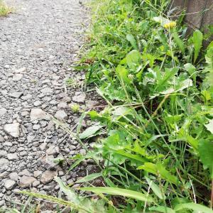 自宅の庭の伸びた草を刈ろう