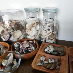 拾ってきた貝殻、そのままでもいいかな ^^