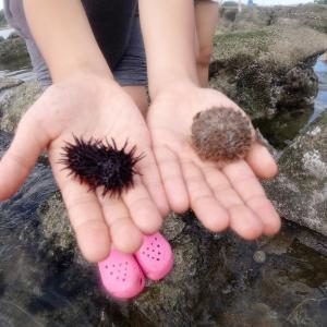 海の生き物探しDAYふたたび
