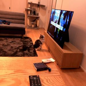 テレビは離れて見ましょう。
