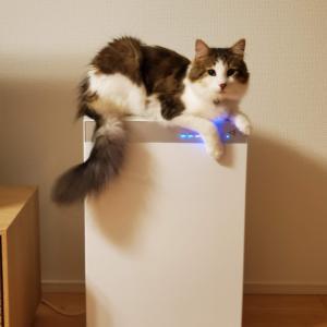 猫アレルギーでも猫飼いたいよね( ᐡ.  ̫ .ᐡ )
