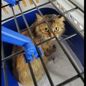 猫の虐待! 佐賀県西松浦郡有田町の山中で相次ぐ
