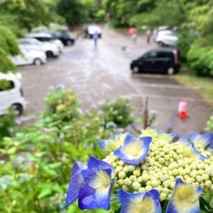 雨と紫陽花のお寺 龍王山三光寺 (岐阜県)