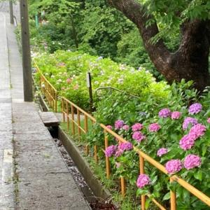 遊具と紫陽花の茶屋ヶ坂公園 あじさい園 (愛知県)