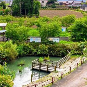 紫陽花と青い宝石との遭遇 本戸輪中堤 (岐阜県)