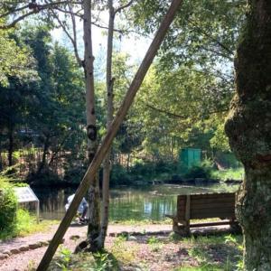 曽根華渓寺の湧き水福水と梅花藻とハリヨの池 (岐阜県)