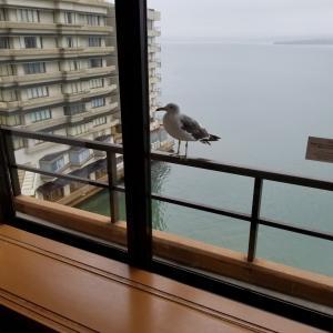 【体験談】石川県でおもてなしを感じるにはこの旅館!