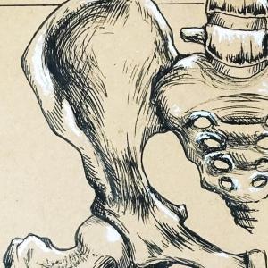 【体験記】骨盤整体は慢性前立腺炎に効果ある?