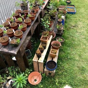 盆栽棚周り清掃