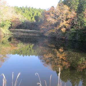 我が家の池に写った紅葉 失敗