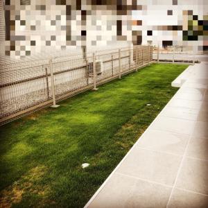 恐ろしい早さで芝生を荒し回るヤツ