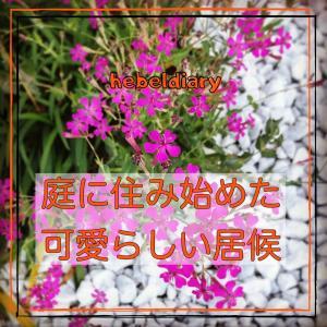 突然庭に生えてきた〇〇な花