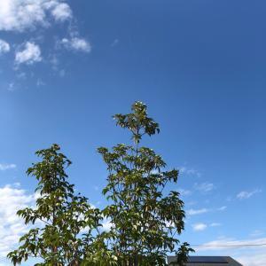 玄関シンボルツリーの巨大な〇〇