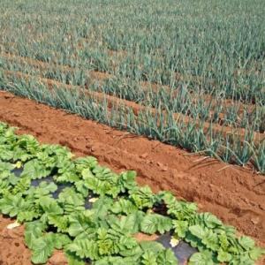 生産緑地の2022年問題について解説いたします!
