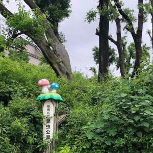 徳丸 昆虫公園と脇の階段からの眺め