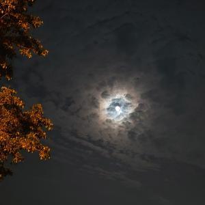 8月の満月 & ウンベラータの葉が立つ!
