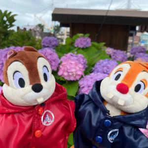 今日の舞浜は傘の準備を忘れずに!おはようございます〜!