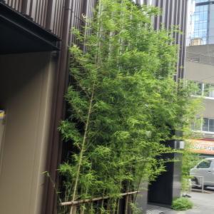 東京に小さなホテルが沢山建設されました  Many small hotels have been built in Tokyo